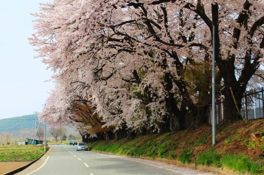 桜 三代校舎 外