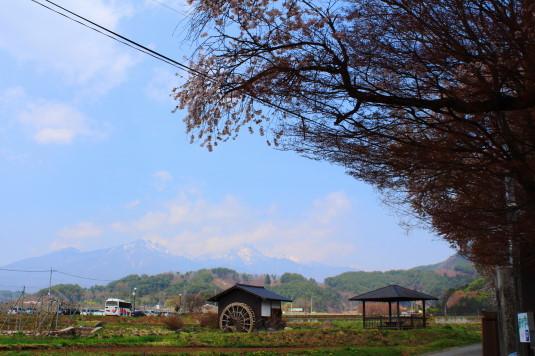桜 三代校舎 八ヶ岳