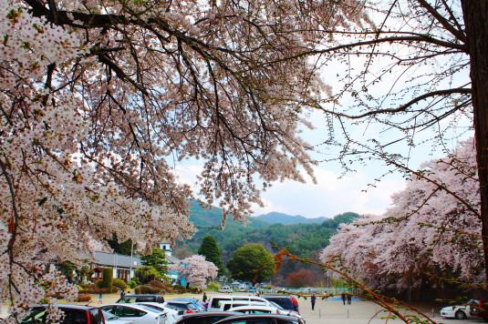 桜 三代校舎 外観