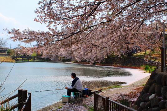 桜 長坂湖 釣り