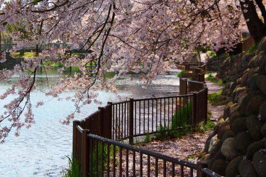 長坂湖 散策路