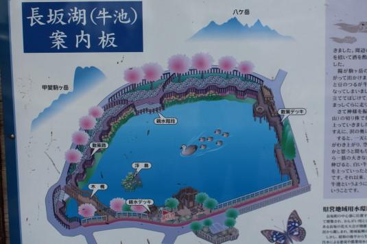 桜 長坂湖 案内看板