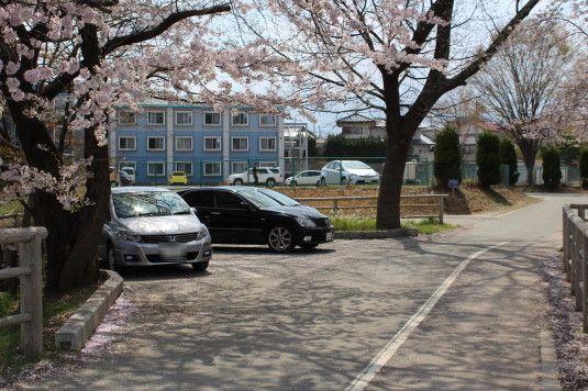 桜 長坂湖 駐車場