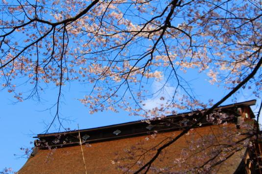 桜 雲峰寺 屋根