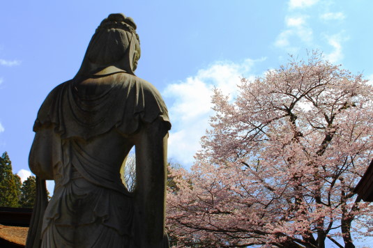 桜 雲峰寺 観音様と桜
