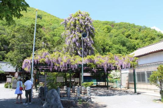 藤の花 岡神社 外観