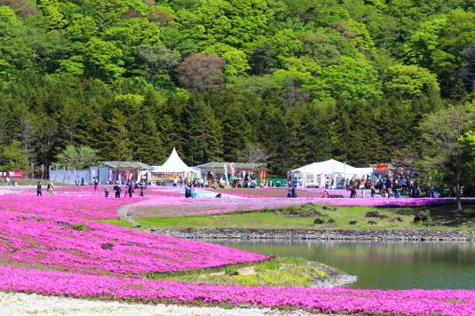 富士芝桜まつり 龍神池 反対