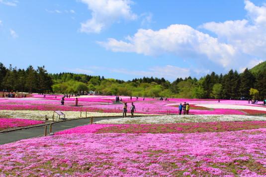 富士芝桜まつり うすい
