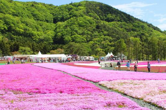 富士芝桜まつり 到着