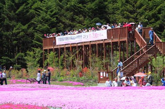 富士芝桜まつり 展望台