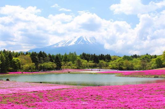富士芝桜まつり 龍神池から