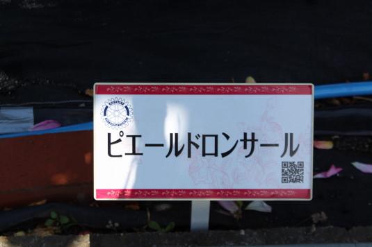 東光寺のバラ 表示