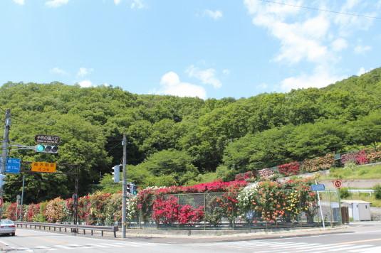 東光寺のバラ 外観