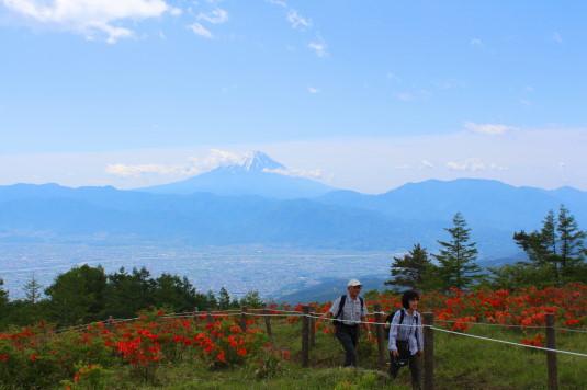 レンゲツツジ 甘利山 山頂 絶景