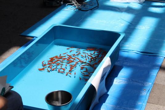 金魚すくい大会 水槽