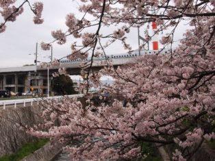 P3292177桜