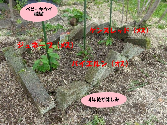 DSC00297_20140503205509be0.jpg