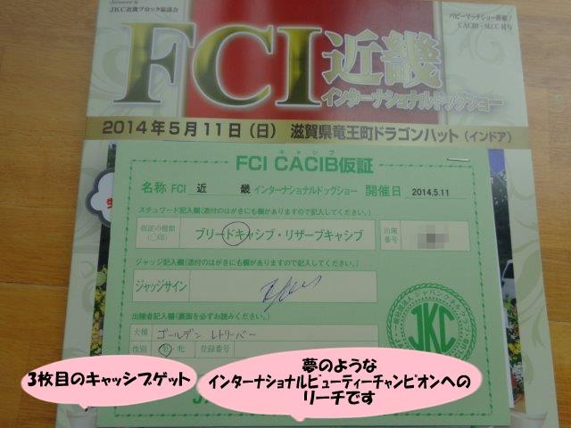 DSC00381_20140512225956178.jpg