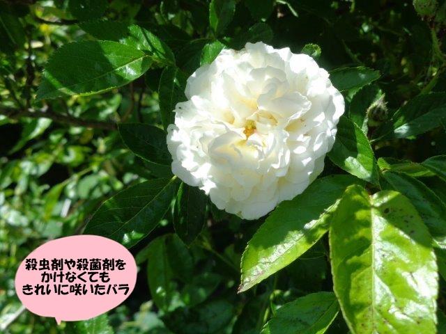 DSC00430.jpg