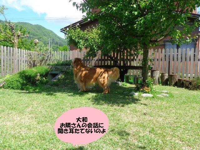 DSC00436.jpg