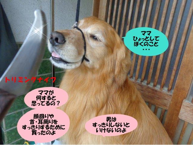 DSC00487_20140521195941093.jpg
