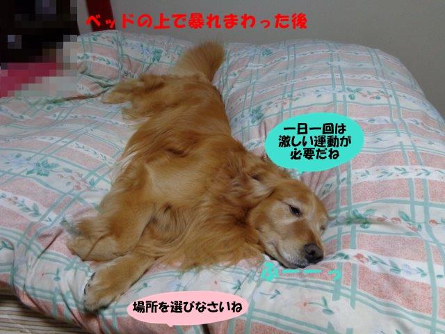 DSC00776_20140226193603aff.jpg