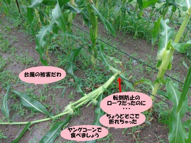 DSC01011_20140711191937269.jpg