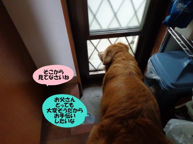 DSC01035_20140714203718fbb.jpg