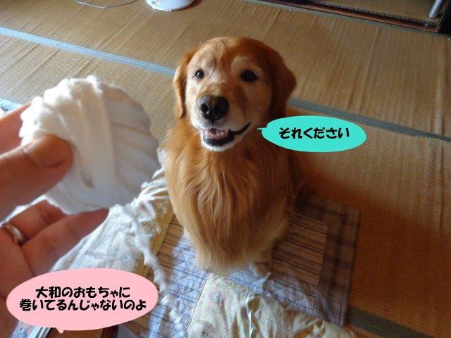 DSC01115_20140720215115001.jpg
