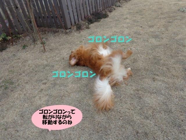 DSC01127_20140325184955898.jpg