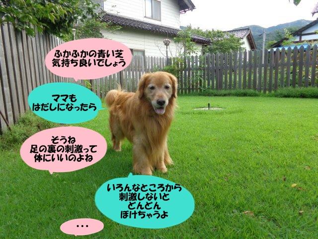 DSC01521_201408212002549ed.jpg