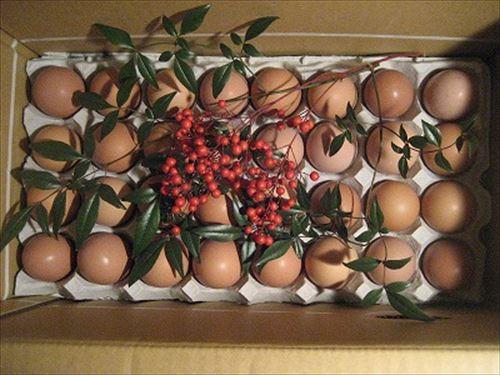 コッコちゃんの卵