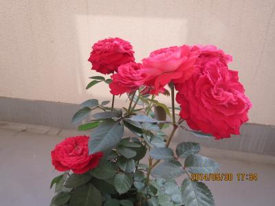 IMG_1913_convert_20140531104914.jpg