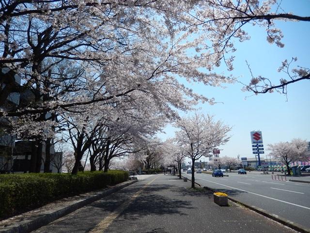 県庁と桜20140407010