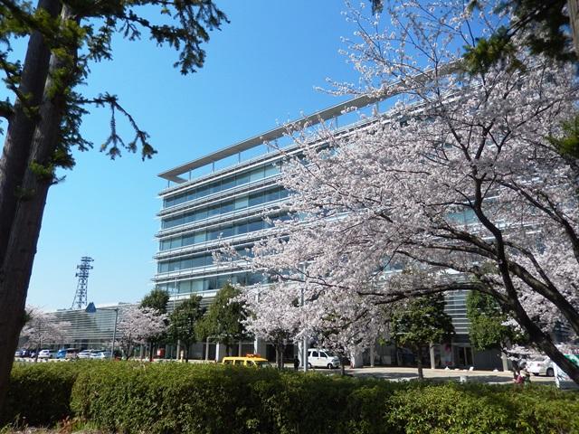 県庁と桜20140407011