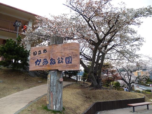 かみね公園20140410006