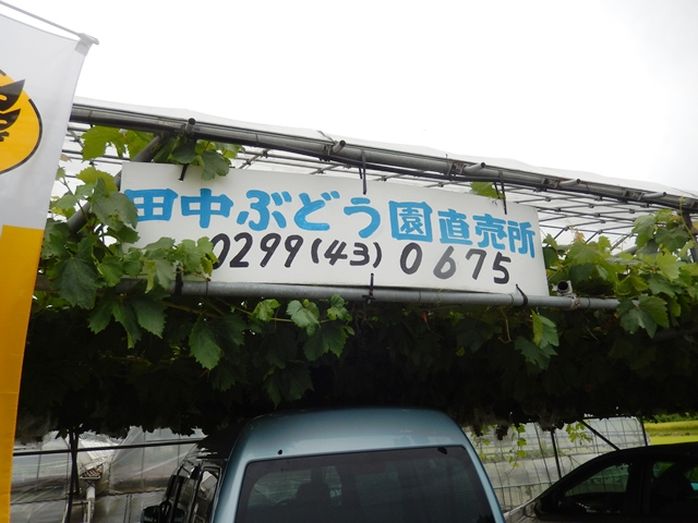 田中ぶどう園20140823001
