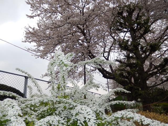 阿漕ヶ浦20140411002