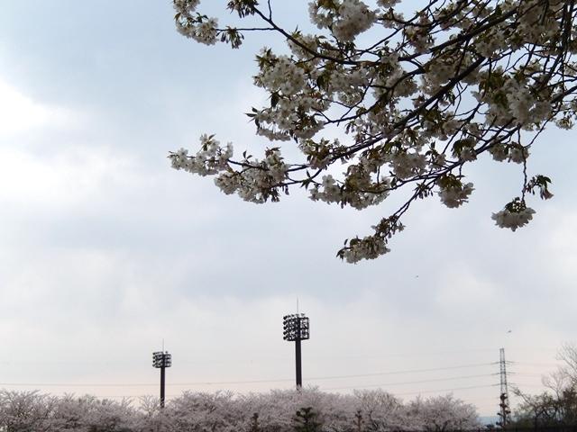 阿漕ヶ浦20140411003