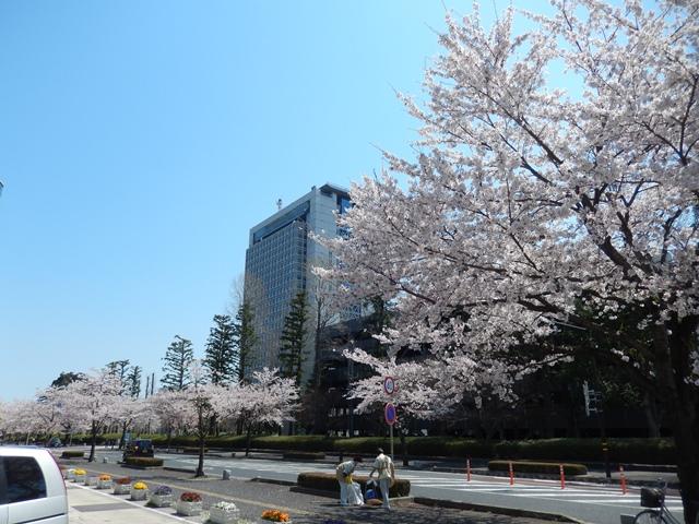 県庁と桜20140407001