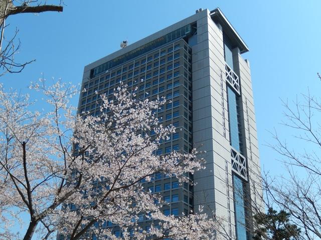 県庁と桜20140407002