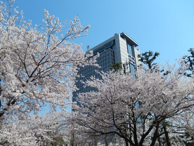 県庁と桜20140407004