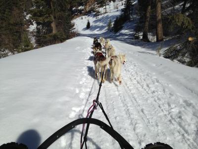 dog sled 3