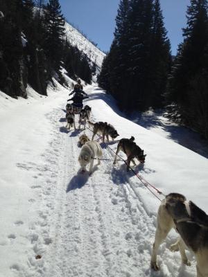 dog sled 11