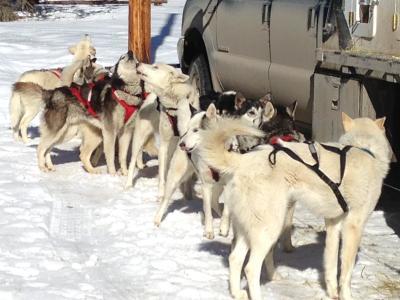 dog sled 1
