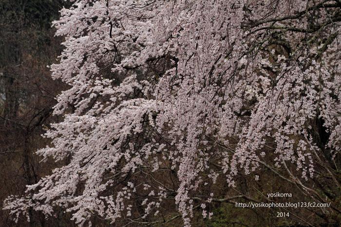 浪合の桜2