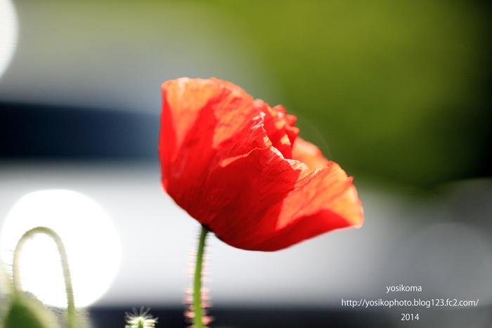近くの花1