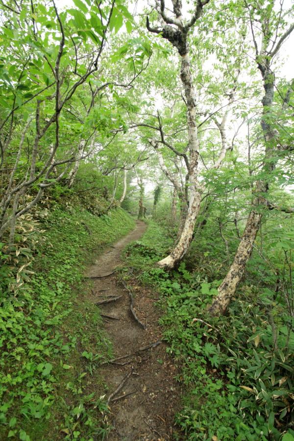 IMG_6587登山道