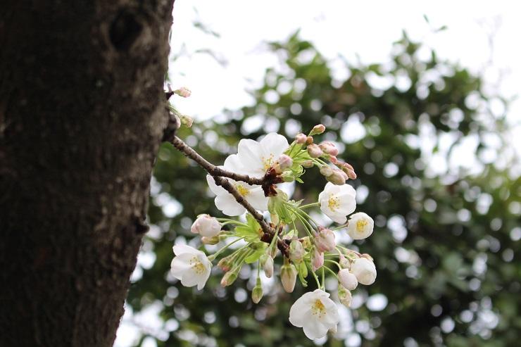 三笠公園2