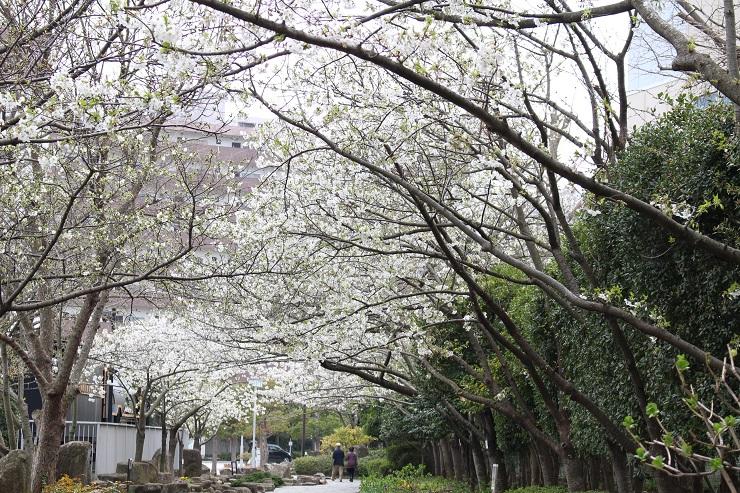 三笠公園4